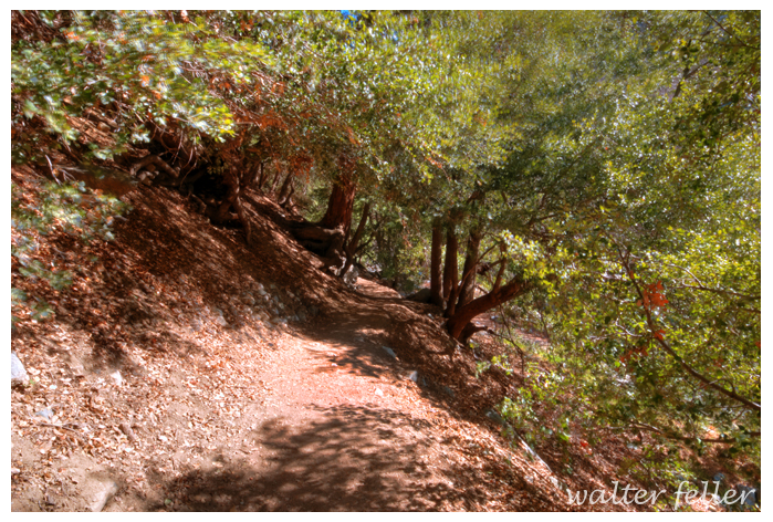 Photo of Icehouse Canyon Trail